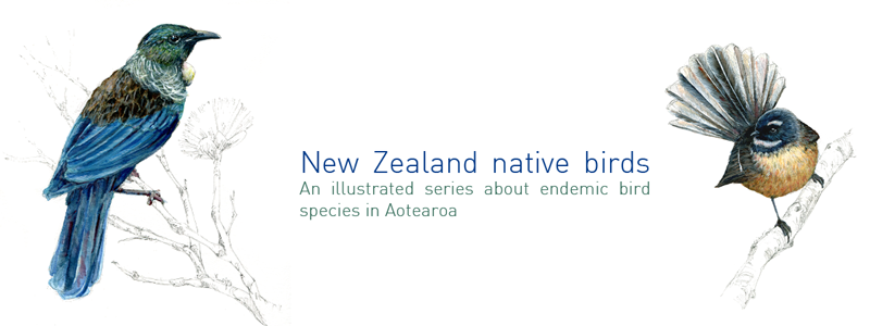new zealand native bird species endemic