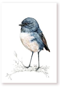 Toutouwai – Robin