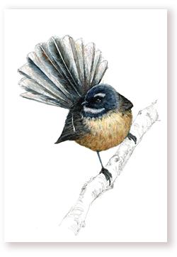Pīwakawaka – Fantail