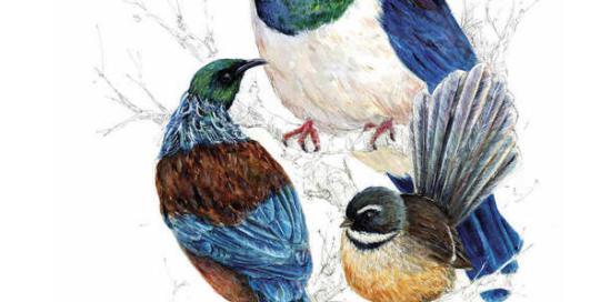 kiwiana, native bird, New Zealand, Kereru, Wood pigeon, fantail, tui, bird, wild life, nature, outdoor, fauna, feather, Aotearoa, kiwi, Emilie Geant, painting, watercolor, ink