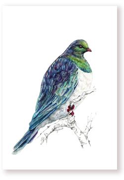 Kererū – Wood pigeon